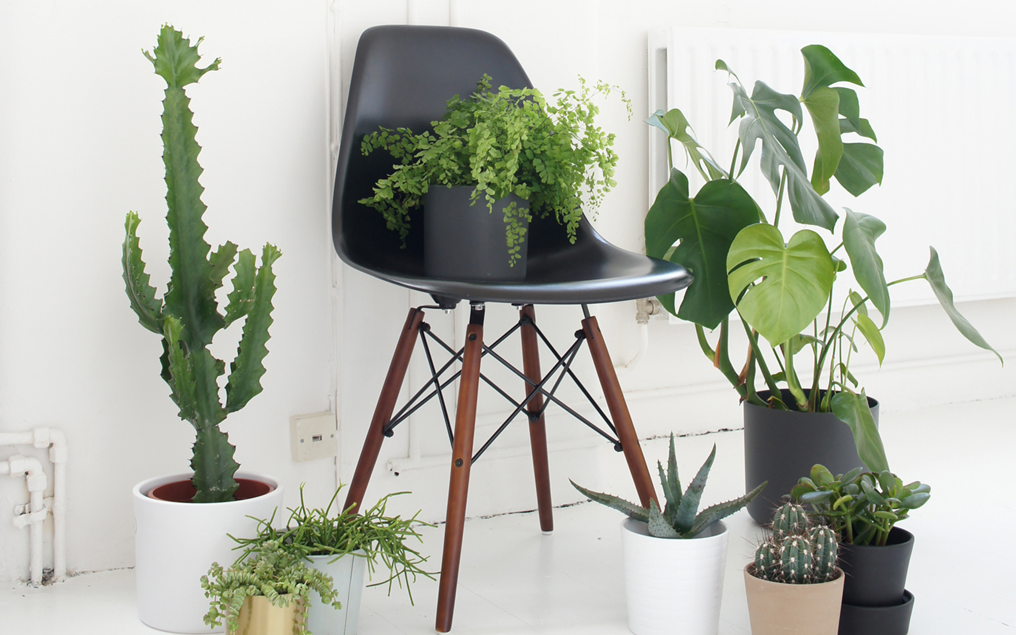 Eames DSW Chair Used To Display Plants